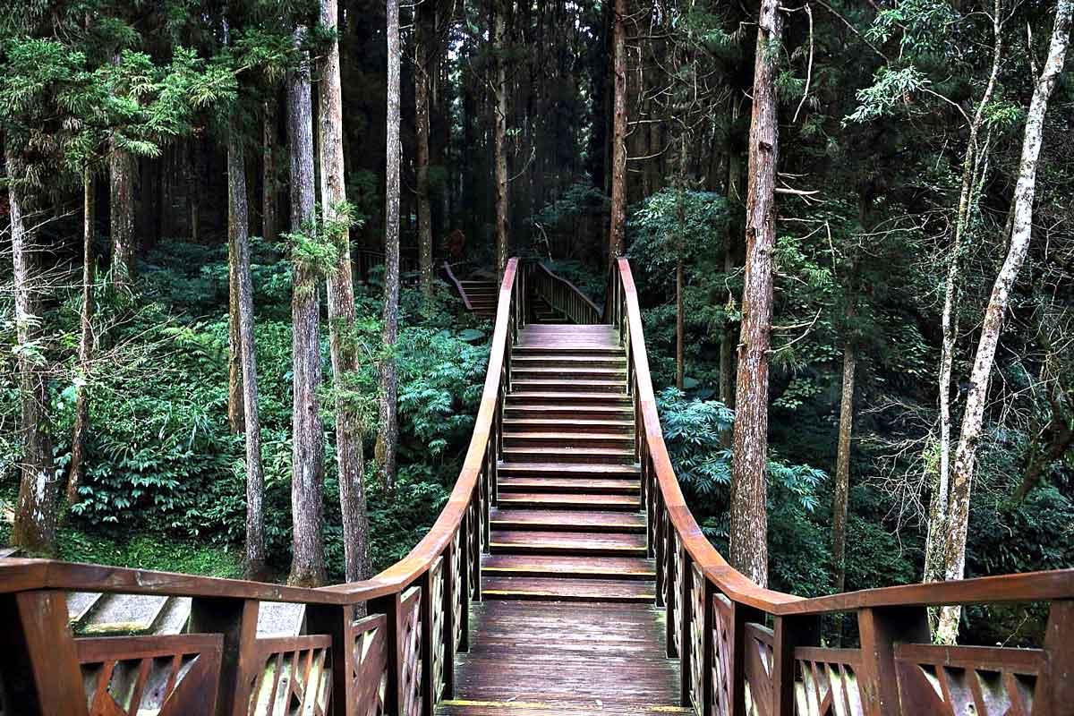溪頭森林遊樂區以國產材設計的銀杏橋。