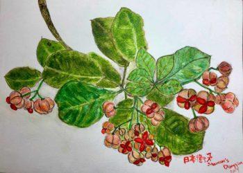 繪圖 / 陳翠玲
