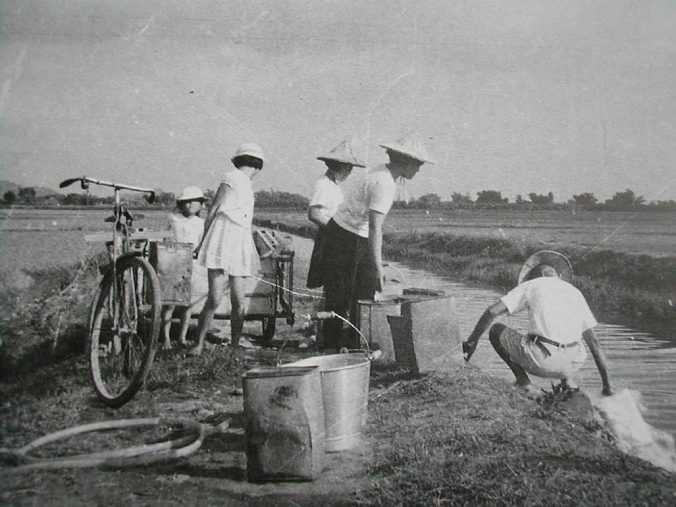 入秋以後開始種菸_假日的學子回家幫忙務農成為例行公事-1326