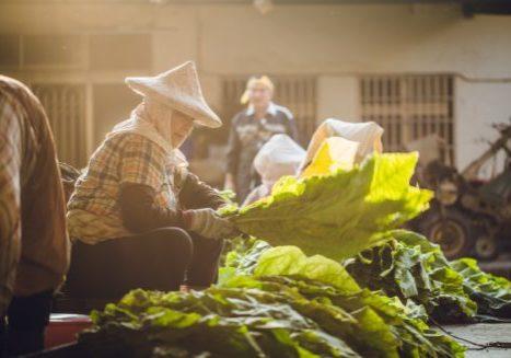 2017收菸_美濃愛鄉協進會總幹事邱靜慧表示_菸業結束不只是一個傳統與文化的沒落,她更關心的是種作這些作物老農未來怎麼辦。攝影連偉志-1326