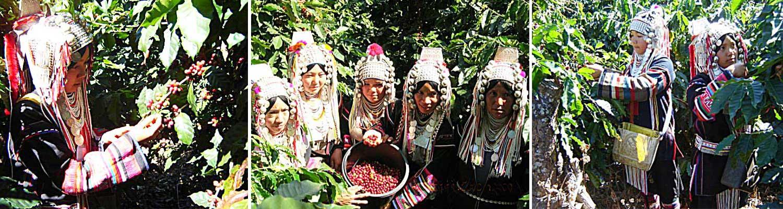 當地採收咖啡豆的情景