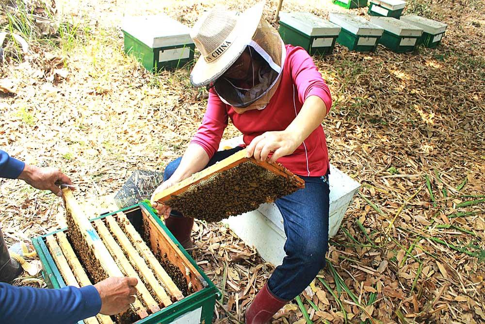 查看蜜蜂的狀況。