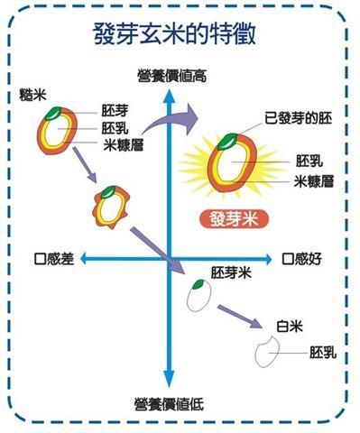 發芽米圖示