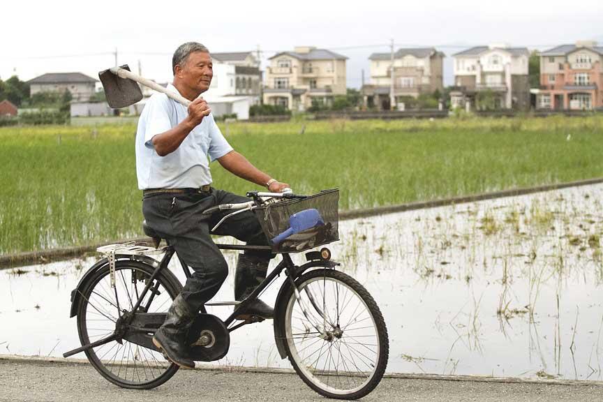 陳文連阿伯早年是養鴨專業,成立有機米產銷班後,將「稻鴨合做」的概念引進有機米的栽培。
