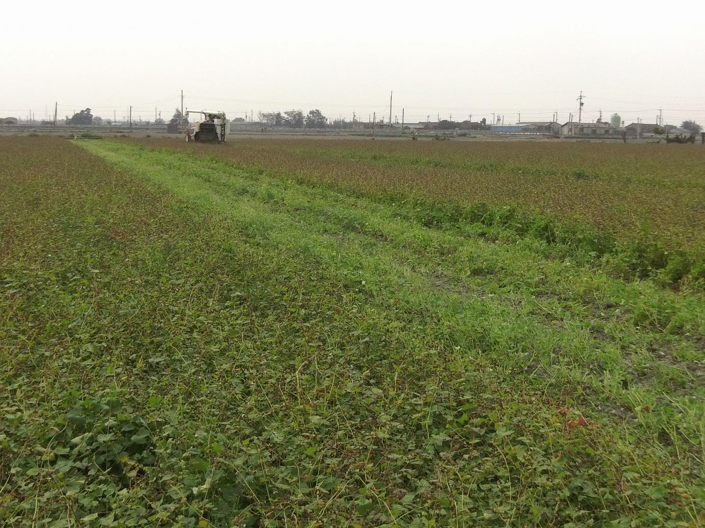 之後,在台灣區雜糧發展基金會經費補助下,開始研發適合在台灣種植的蕎麥品種。