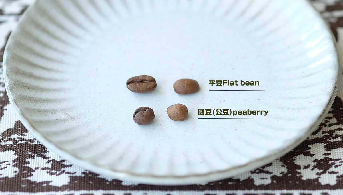 一般平豆(上排),公豆(下排)