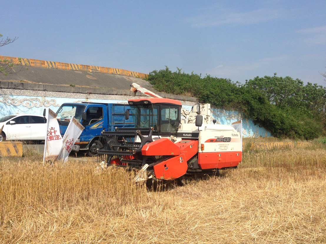 小麥採收時