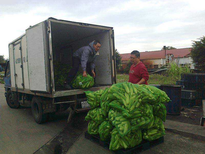 從產地使用專車載運有機玉米進廠。
