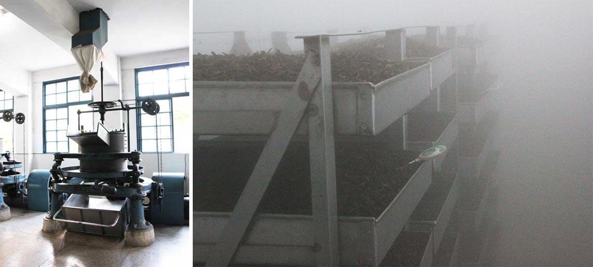 萎凋完成的茶葉(圖左),接著到控濕控溫發酵室中進行發酵(圖右)。