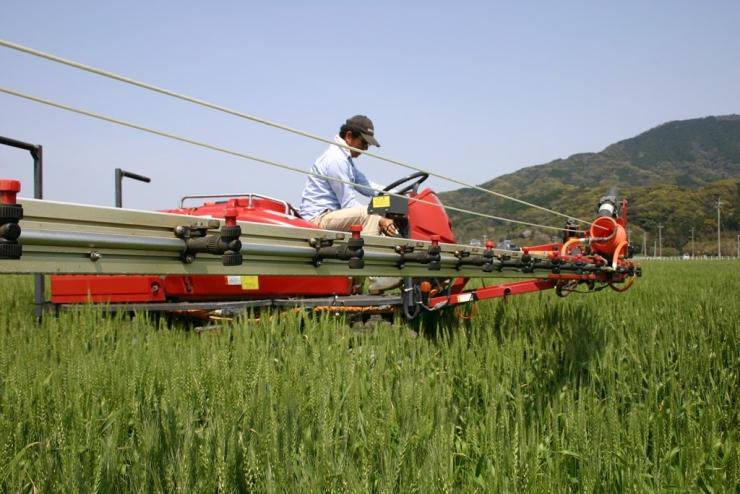 麥田裡的農人小金丸滿(圖片/東福製粉提供)